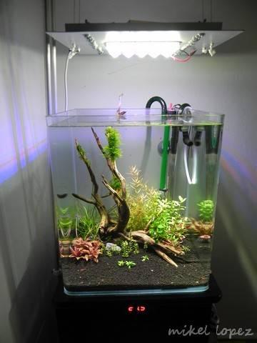 """Cubic 32 litros """"Maisha"""" (intento de plantado) DSCN4485_zpsef33e92b"""