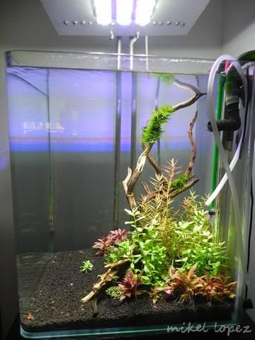 "Cubic 32 litros ""Maisha"" (intento de plantado) DSCN4486_zps2823fc2d"