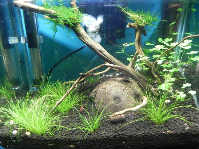 mi primer mini acuario - Página 2 Mini5semana-2
