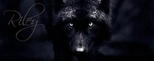 My new GFX'S Wolf