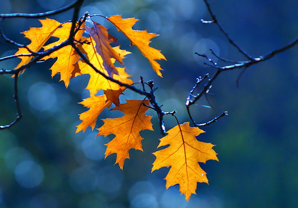 Làm vườn viết thơ vườn - Page 2 Autumn2b