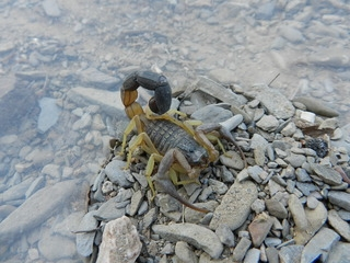 Oman 2016 - camping, off-roading and scorpions. DSCN5371_zpsodzngbos