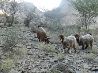Oman 2016 - camping, off-roading and scorpions. DSCN5402_zpszfjc2yqx