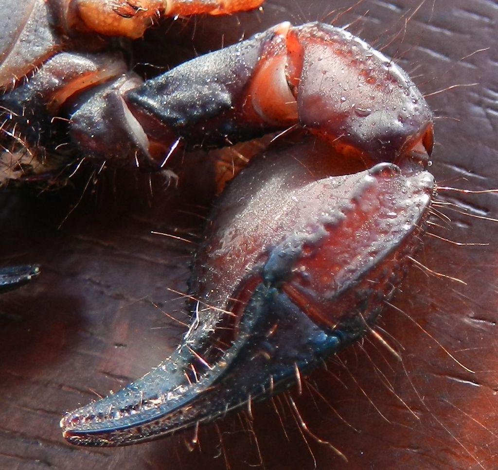 [Discussion] Pandinus ugandaensis identification. 10