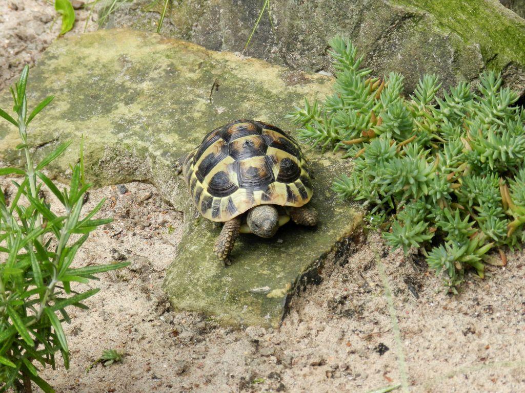 Callums Reptiles. DSCN1383