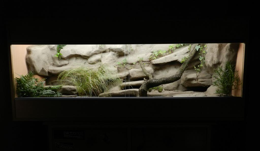 Callums Reptiles. DSCN2025