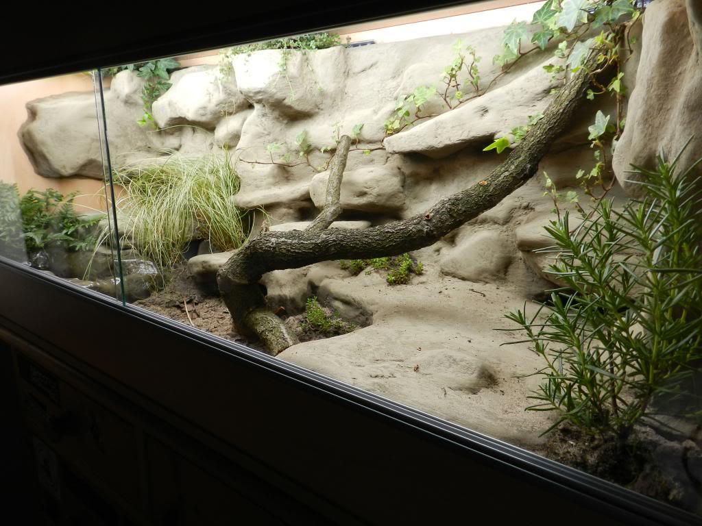 Callums Reptiles. DSCN2032