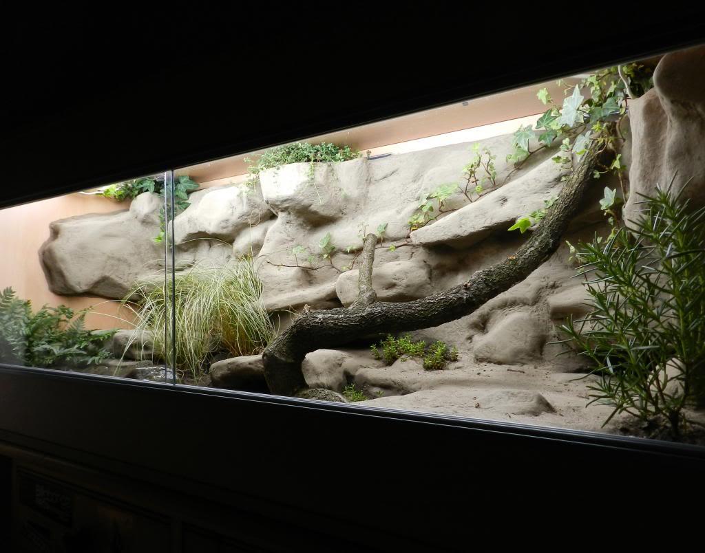 Callums Reptiles. DSCN2036