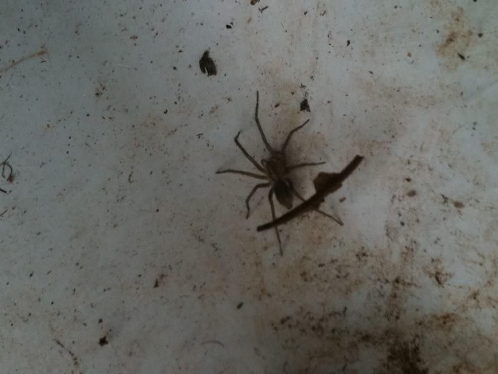 Trog's daily critter pics Bugsintheyard009