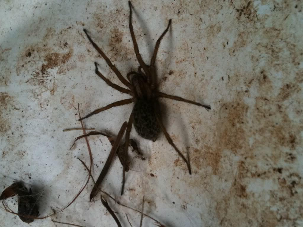Trog's daily critter pics Bugsintheyard010