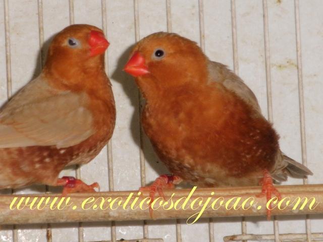 Mandarins 2012 P5200738