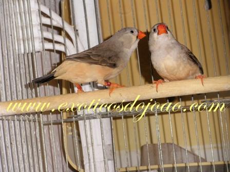 Mandarins 2012 P5200765