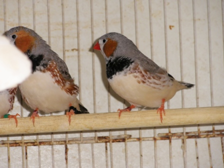 Mandarins 2012 P5200820-1