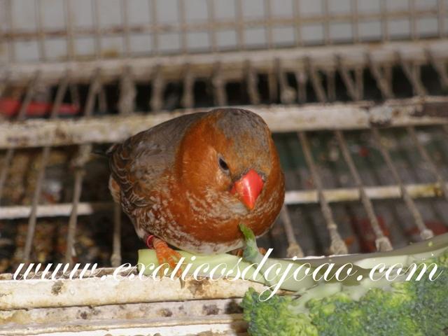 Mandarins 2012 P5270053