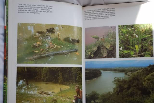 Guide des plantes aquatiques - Tetra DSC_0197640x480