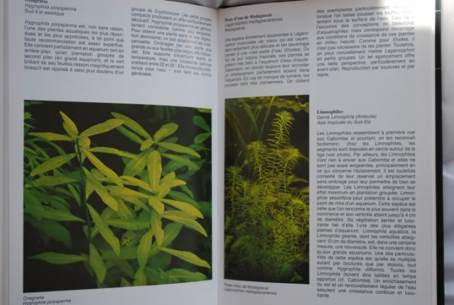 Guide des plantes aquatiques - Tetra DSC_0198640x480