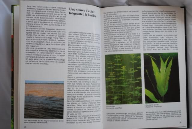 Guide des plantes aquatiques - Tetra DSC_0207640x480