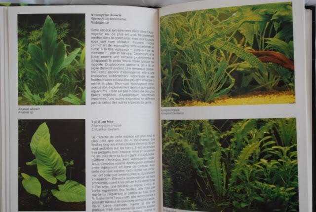 Guide des plantes aquatiques - Tetra DSC_0209640x480