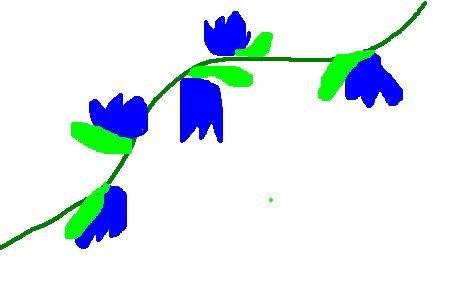 Plant Leaflet/Poster Tulivy