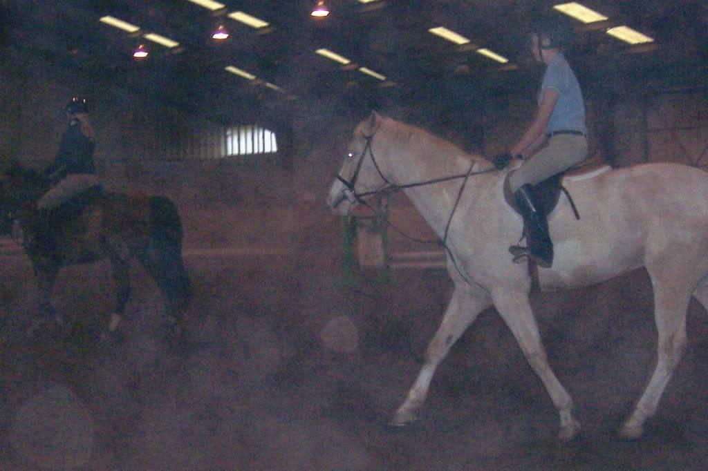 Various riding/confo pics/vids Gingerandhorseshow815