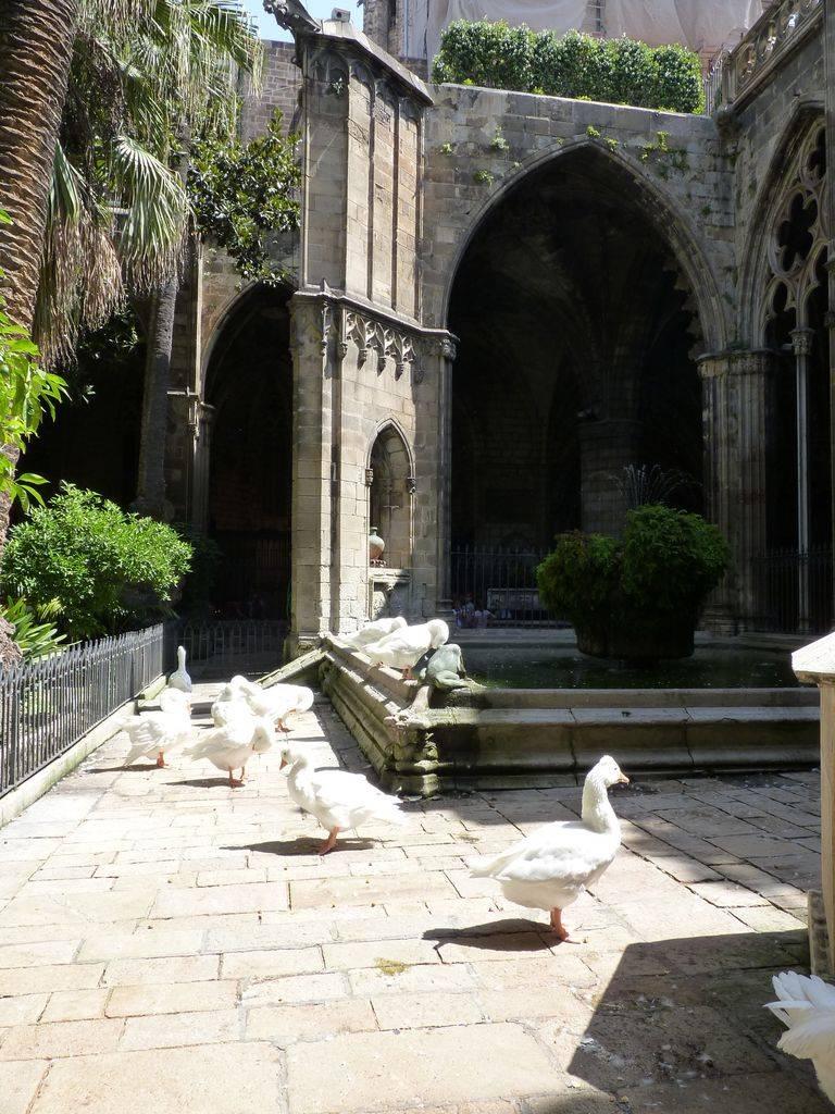 Barcelona-Ibiza-Mallora August 2012 P1170848