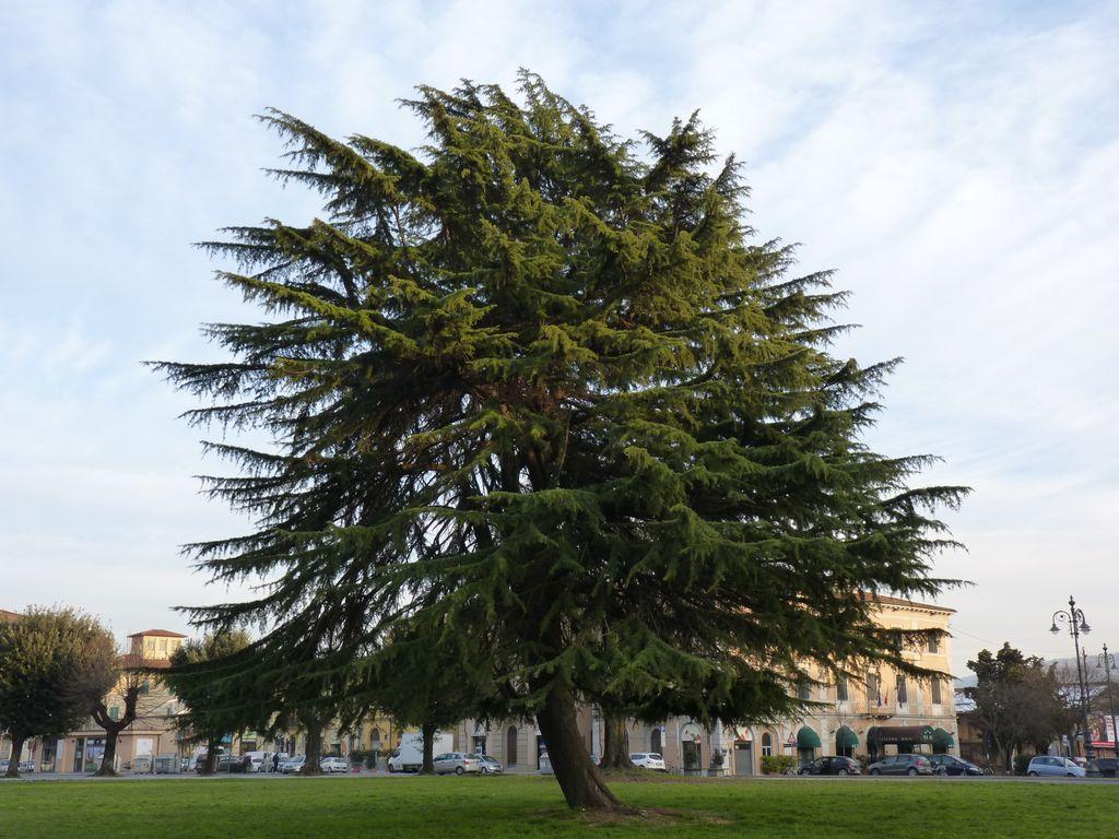 Toscana si Emilia-Romagna iarna It2012_038_zpsd4447d77