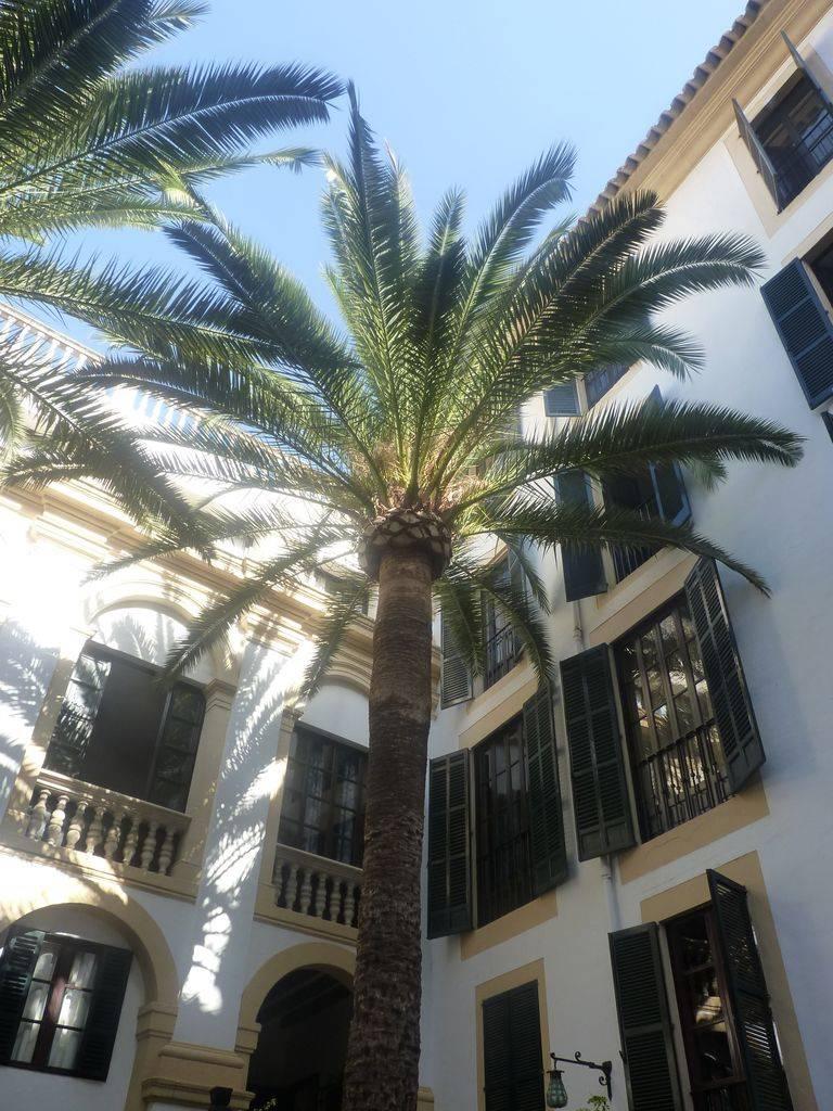 Barcelona-Ibiza-Mallora August 2012 P1200010