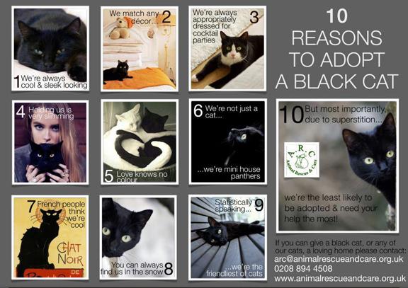(Υιοθετήθηκαν!) 3 μαύρα γατάκια ζητούν ΑΜΕΣΑ σπιτάκι! 10-reasons-to-adopt-a-black-catSMALL