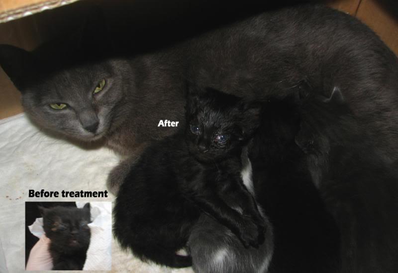 Χαρίζονται ζουμπουρλίδικα γατάκια 2 μηνών - Υιοθετήθηκαν! Babies
