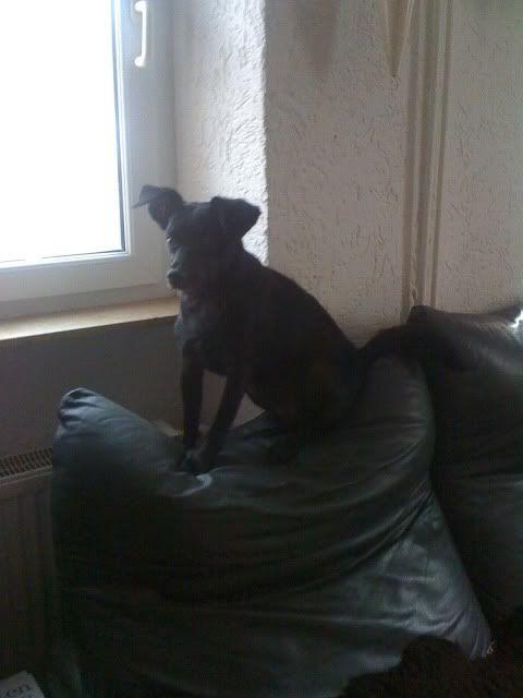 Der Hundethread IMG_0414
