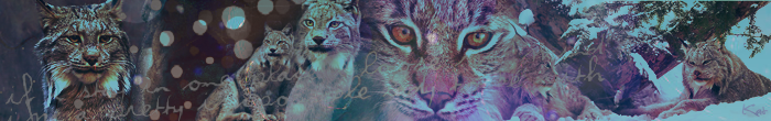 Chall #483 - Banner - My favourite animal {AWARDS} Lynx