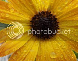 Easter Flowers 6e3136d2-b95d-4305-bafb-e5524766b984_zps81b4987f