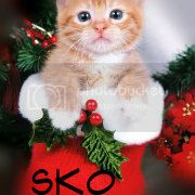 Anybody want to make Sko a Christmas Avie? 1143699Domestic-Cat-Kitten-in-Ch-1-1
