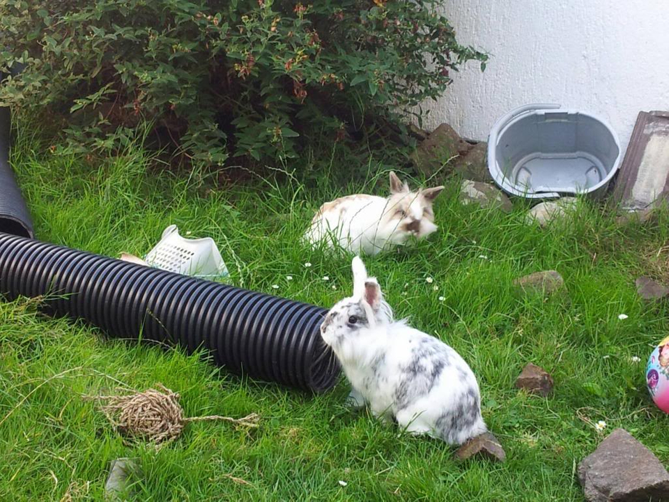 Hello from myself, my bunnies and piggies. 1233291_10151903454945774_952675267_o_zpsb8f1a587