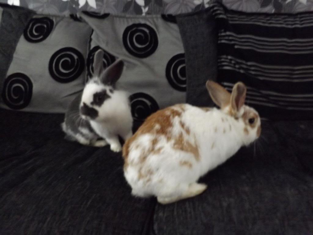 Hello from myself, my bunnies and piggies. DSCF0036_zps0920f5c7