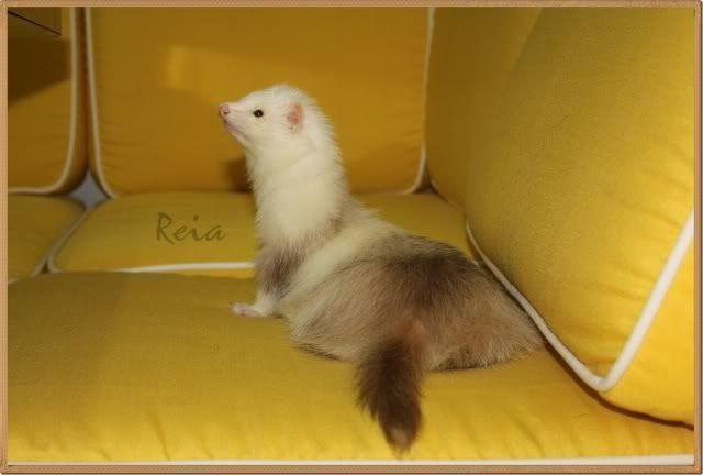 Book de Reia, actualizado 24/02/2011 E2a01fc1