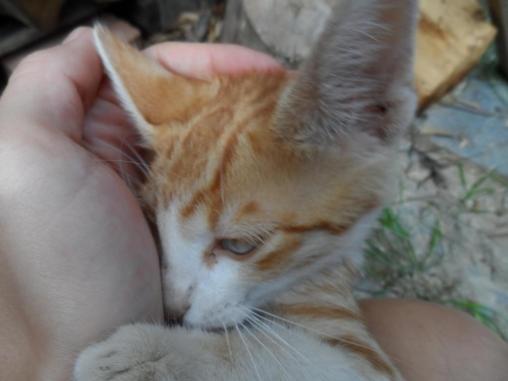 Μικρα πορτοκαλι γατακια. Kitty3