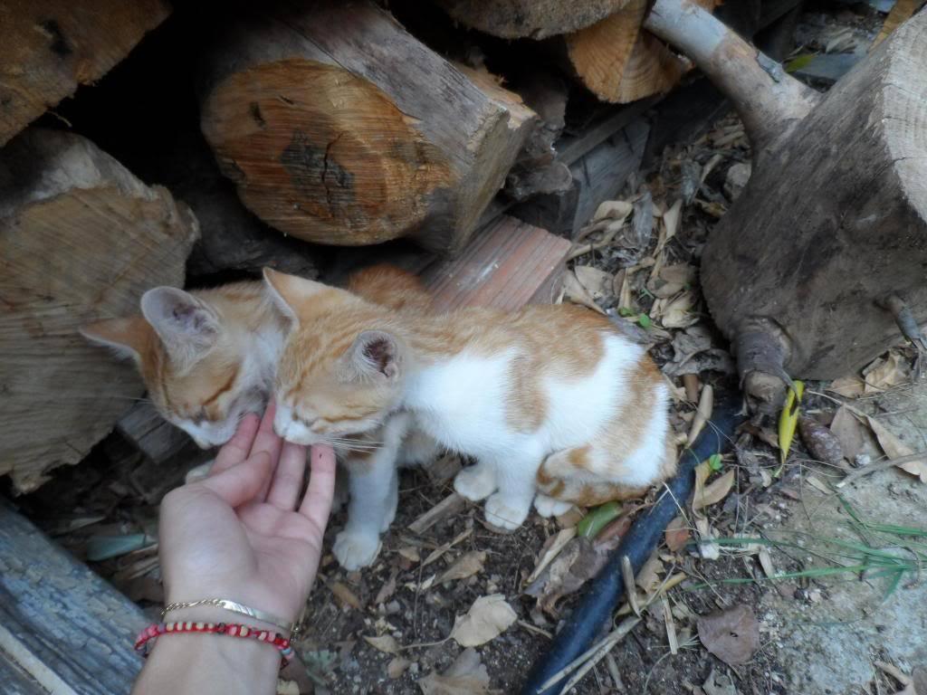 Μικρα πορτοκαλι γατακια. Kitty5