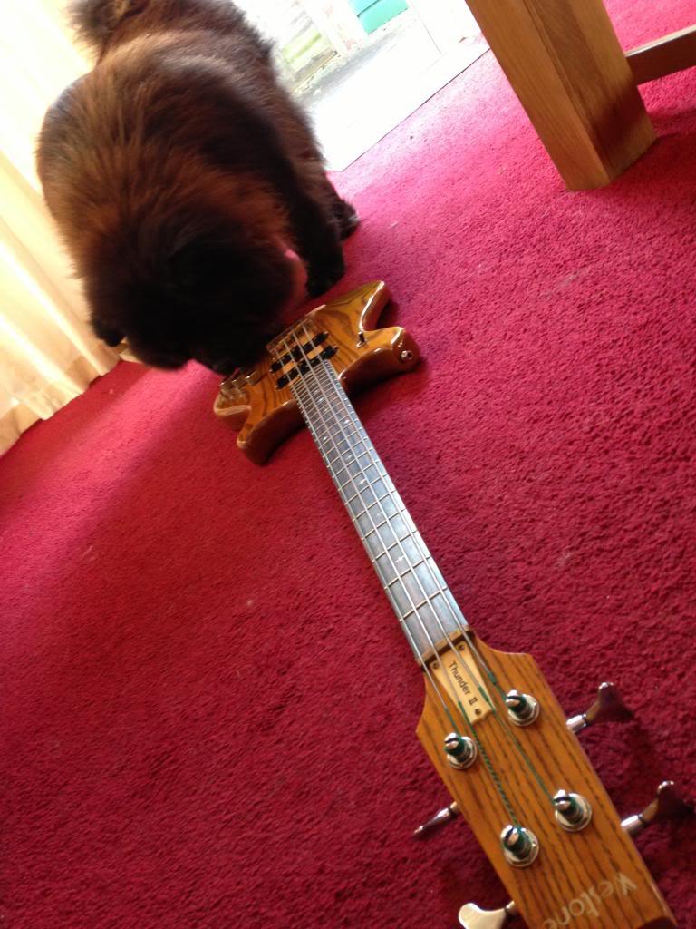 BASS - Thunder II Active bass. WestoneThunderIIwithaddeddog