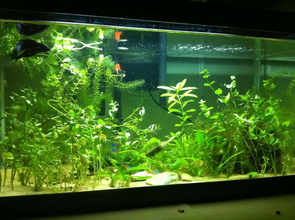 my 16 gallon aquarium C9ac4c01