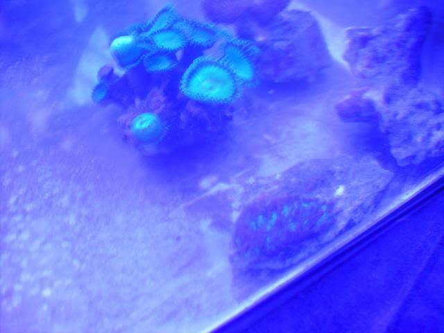 Bac NanoRécifal 85L PICT4767