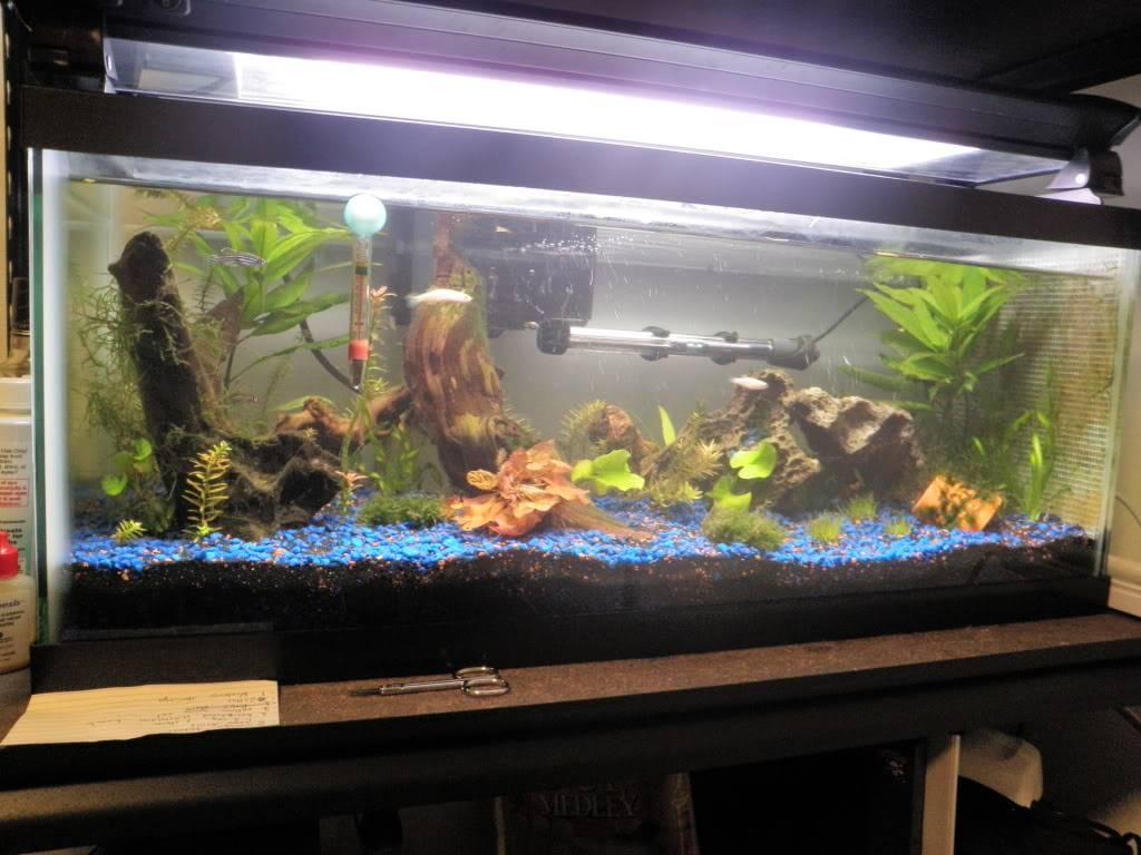 my 20 L freshwater PB202093-1