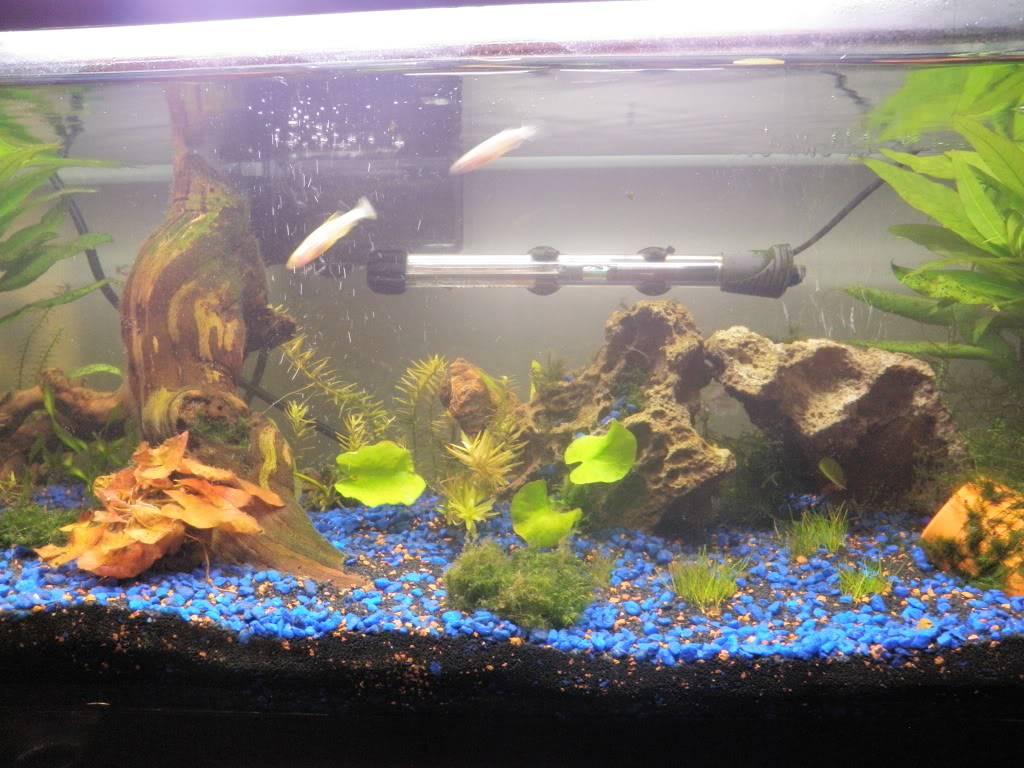 my 20 L freshwater PB202096-1