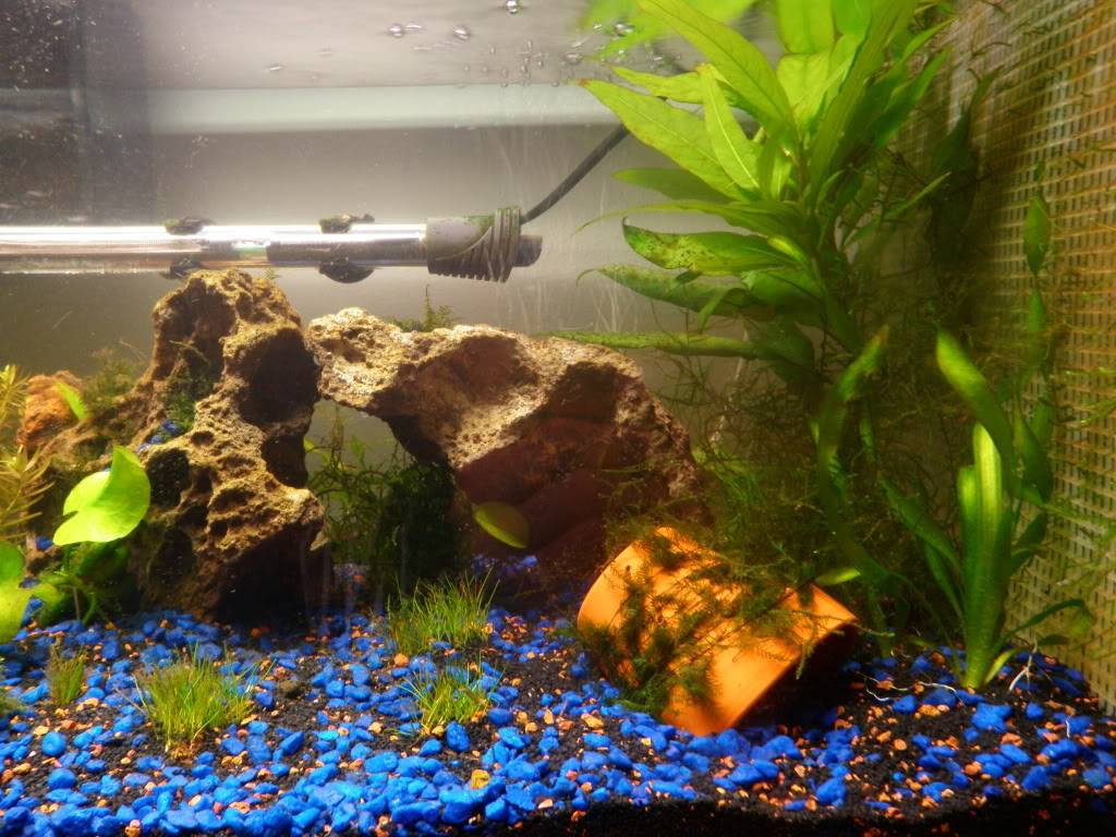 my 20 L freshwater PB202099
