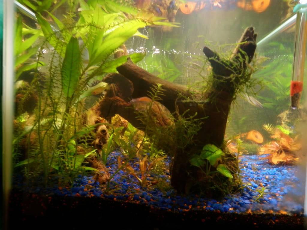 my 20 L freshwater PB202104