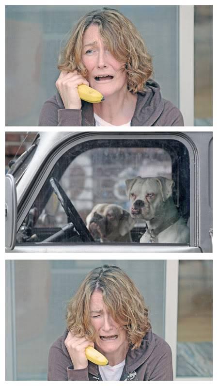 Amusing Photos - Page 13 Banana-dogs