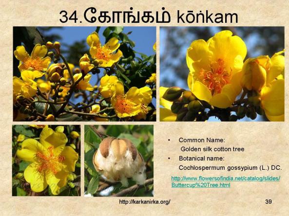 குறிஞ்சிப்பாட்டில் 99 மலர்கள்:பட்டியல் நிறைவு பெற்றது ! - Page 3 Slide39