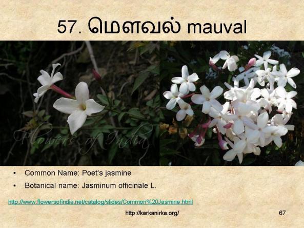 குறிஞ்சிப்பாட்டில் 99 மலர்கள்:பட்டியல் நிறைவு பெற்றது ! - Page 4 Slide67-1