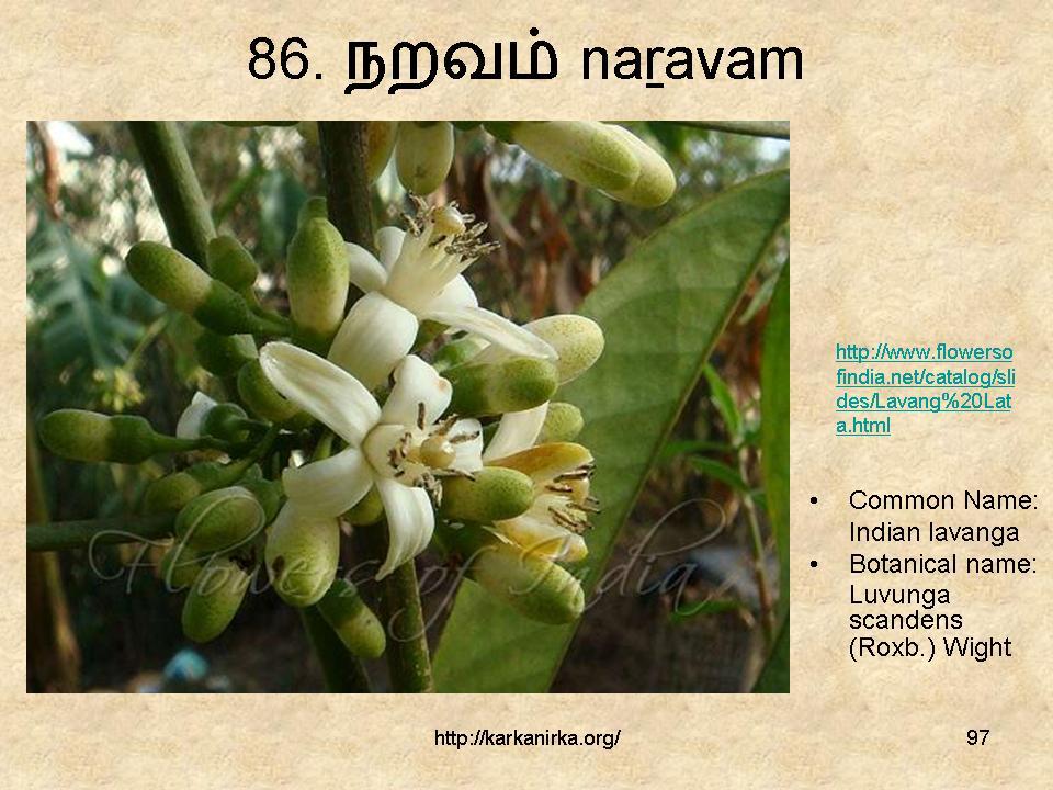 குறிஞ்சிப்பாட்டில் 99 மலர்கள்:பட்டியல் நிறைவு பெற்றது ! - Page 6 Slide97