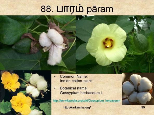 குறிஞ்சிப்பாட்டில் 99 மலர்கள்:பட்டியல் நிறைவு பெற்றது ! - Page 6 Slide99